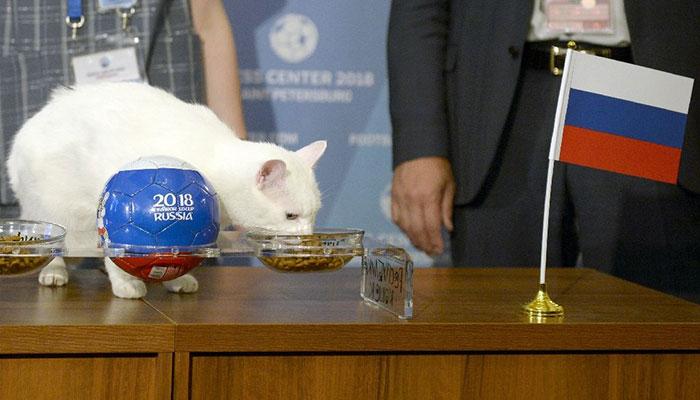 Synsk kat forudser russisk sejr over SaudiArabien